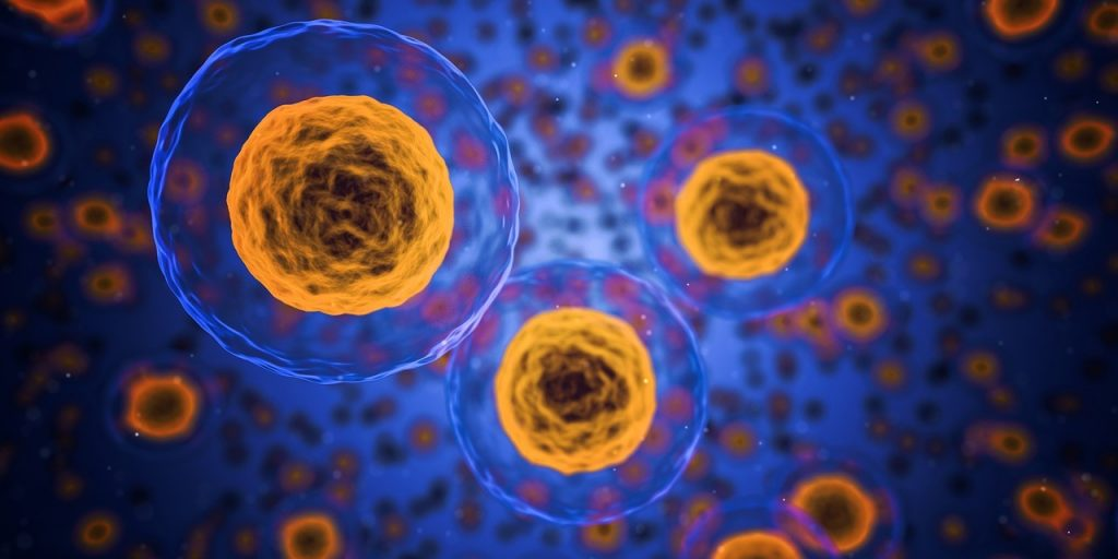 Slowing Down Aging at the Cellular Level